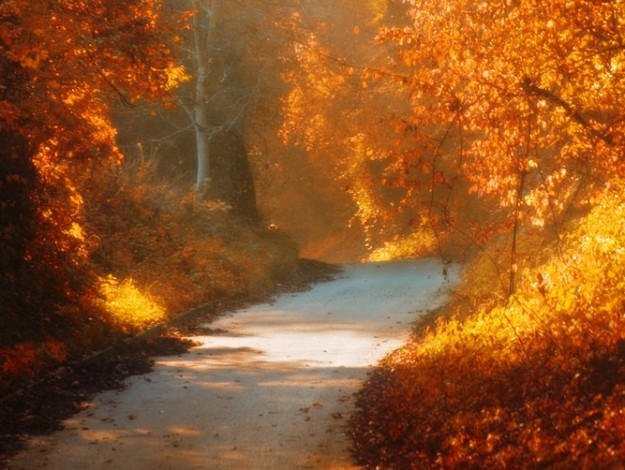 Path in Fall